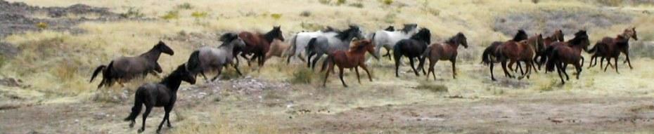 herd-running2